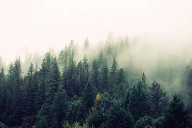 nature-forest-trees-fog